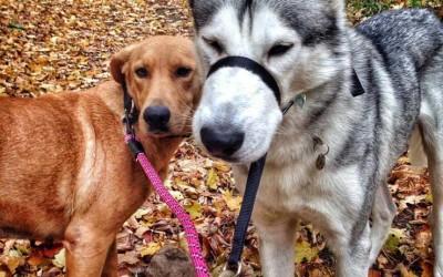 Milo & Daisy: My New Quilting Buddies